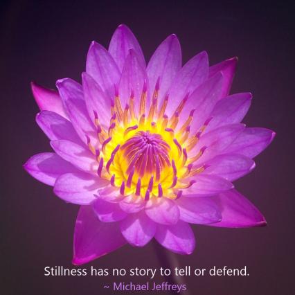 MJ stillness quote purple flower