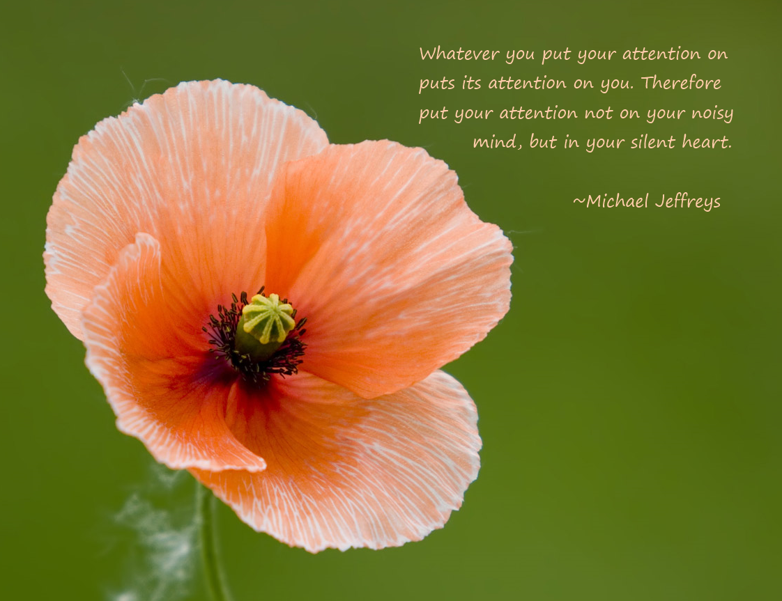 Where is your attention in the head or heart meditation picture mj silent heart pale poppy flower pic quote mightylinksfo