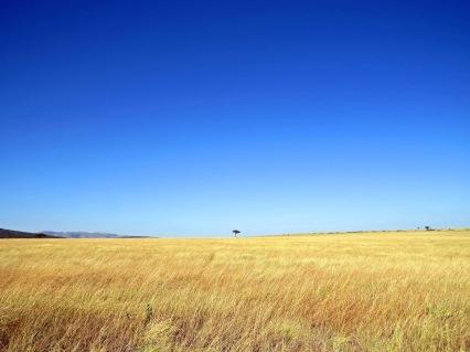 sky wheat field