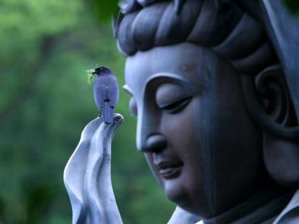 birds-buddha_00406998