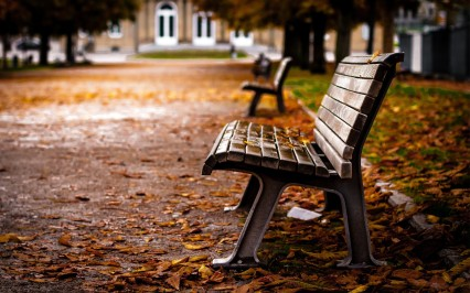 Bench-At-Park-Wallpaper-High-Resolution