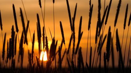 Sunset-Farm-Hd-Desktop-Wallpaper