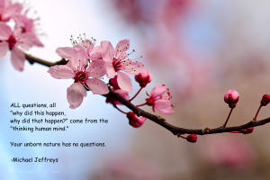 mj unborn no questions cherry blossom pic quote