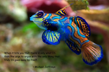 mj only ever this colorful fish pic quote
