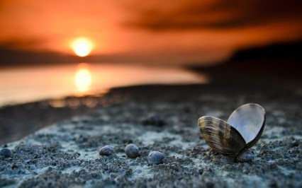 beach-sunset-landscape-shells-sea-sand-pebbles-hd-wallpaper