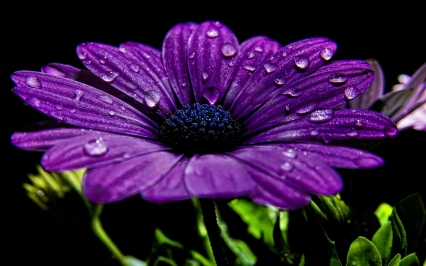 flower_night_drops_dew_close-up_21128_3840x2400