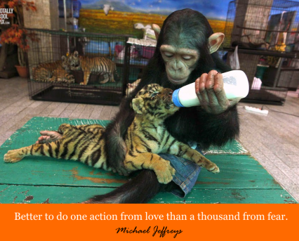 mj monkey feeding baby tiger pic quote