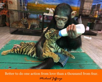 mj monkey feeding baby tiger pic quote