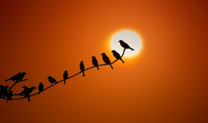 birds on branch orange sky