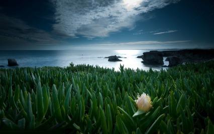 white-flower-on-the-coast