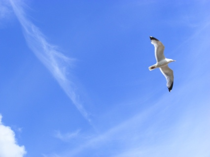 nature-bird-flying-sky-blue1