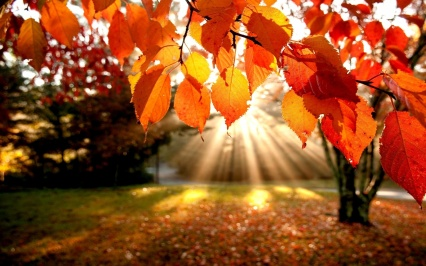 autumn-leaves-sun-light