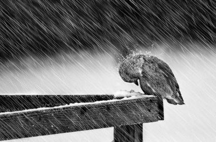 bird-in-snow