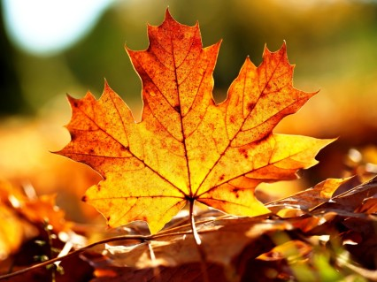 Autumn Leaves Background - Wallpapers
