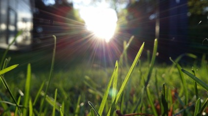 blade of grass in sun rays