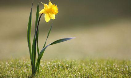 yellow flower wet grass