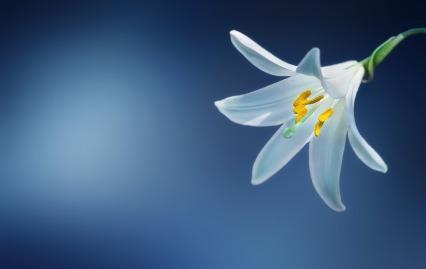 flower-729514_1920