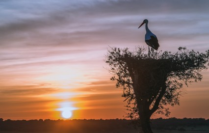 stork tree sunset