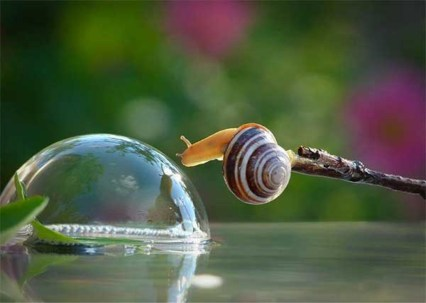 snail looking